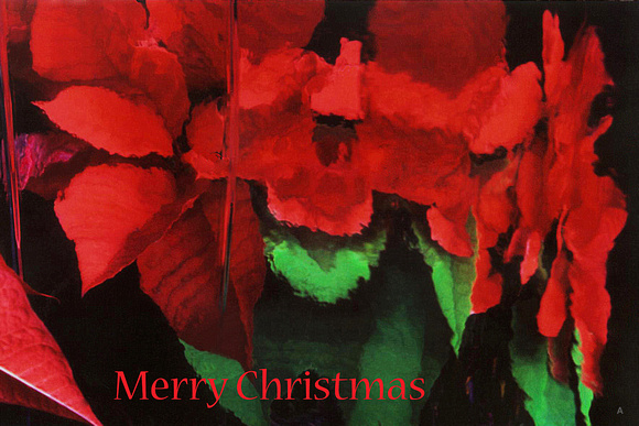 Poinsetta Holiday Card