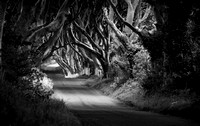 The Dark Hedges in monochrome